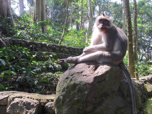 Sacred_Monkey_Forest_Sanctuary